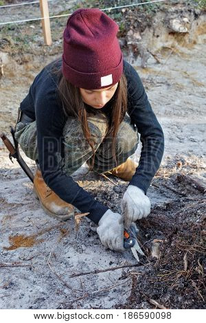 Girl cuts off the roots of the stump during archaeological work