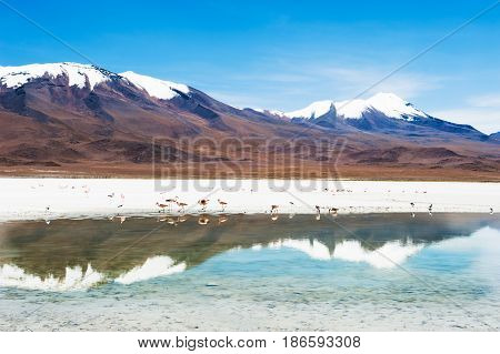 High-altitude Lagoon And Volcano On Plateau Altiplano, Bolivia