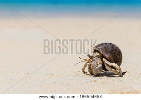 close up; Hermit crab on tropical beach