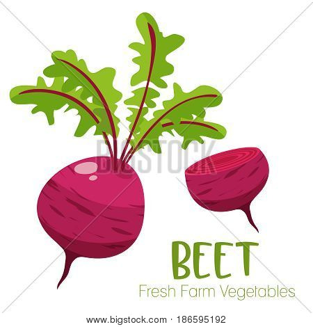 Vector beet isolated on white background.Vegetable illustration for farm market menu. Healthy food design poster. Cartoon style vector