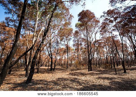 Fire Burned Forest