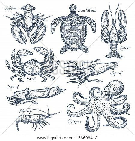 Sea animals and seafood sketch set. Ocean crab, octopus, lobster, shrimp, squid, sea turtle isolated symbols for fish market label, seafood restaurant menu, sea fishing themes design