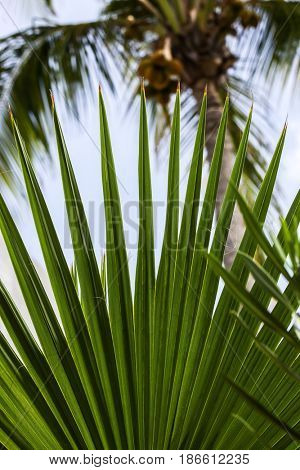 Tropical leaves view from caribbean island