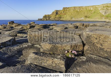 The Famous Giant's Causeway