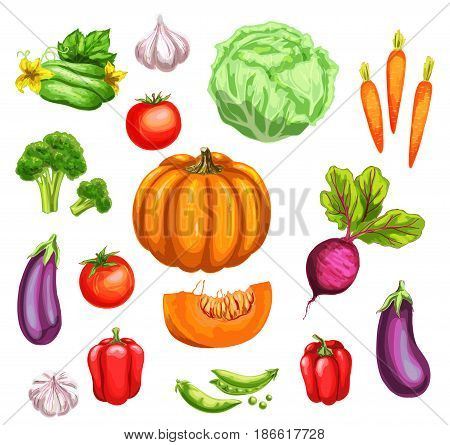 Fresh vegetable watercolor set. Tomato, carrot, bell pepper, broccoli, garlic, cabbage, cucumber, green pea, pumpkin, eggplant and beet veggies hand drawn illustration for organic farming, food design