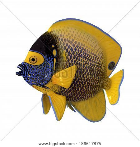 3D Rendering Blueface Angelfish On White