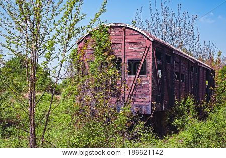 Vintage wooden railway wagon derelict captured by vegetation