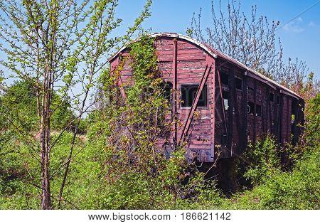Vintage wooden railway wagon derelict captured by vegetation