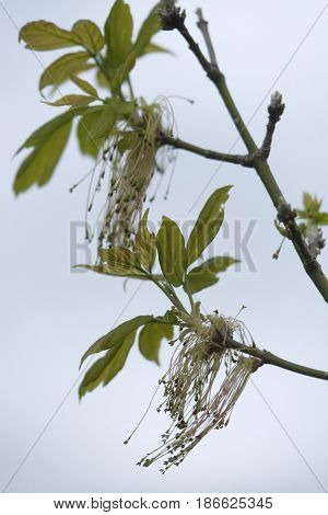 Branch with the leaves close up
