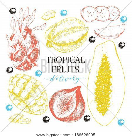 Vector hand drawn exotic fruits. Engraved smoothie bowl ingredients. Tropical sweet food delivery. Pitaya carambola papaya mango fig acai. Use for exotic restaurant food party