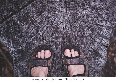 Closeup of man's feet on the old stump - wooden background. Man standing on a cut tree.Closeup of man's feet on the old stump - wooden background. Man standing on a cut tree.