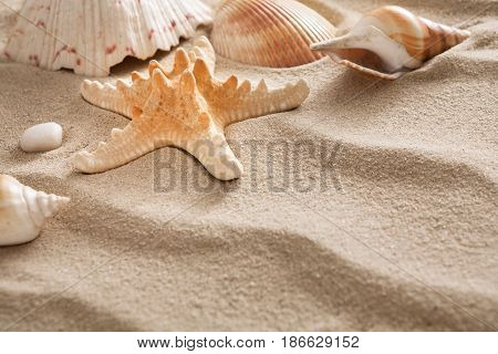 Sea beach sand background with seashells and starfish. Natural seashore textured surface