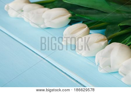 White tulips on blue wood background, copy space. Bouquet of spring fresh flowers, mockup for greeting card