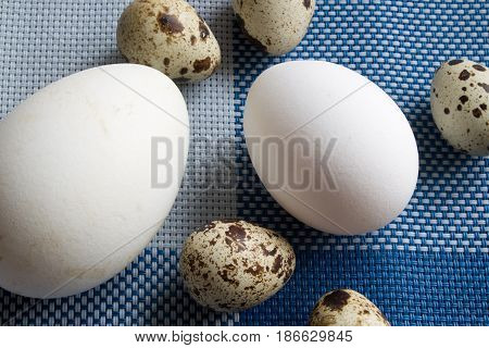 goose chicken and quail eggs. closeup shot