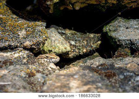 Springtime. Macro shot of a salamander .