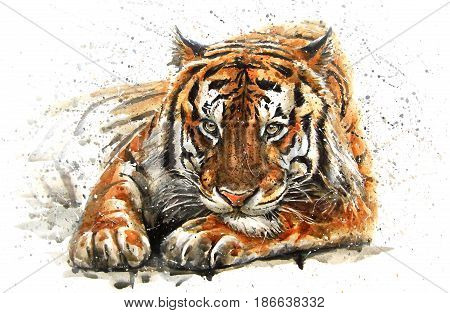 Tiger, animals, watercolor, wild, cat, illustration, graphic, wildlife