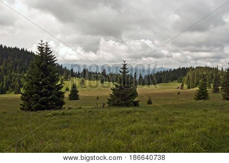 Stredna polana mountain meadow bellow Velky Choc hill in Chocske vrchy mountains in Sovakia with isolated trees wooden hut and hills of Velka Fatra mountains on the background