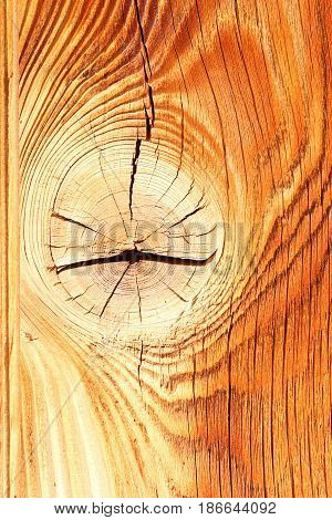 colorful spruce wood texture with knot ready for your design