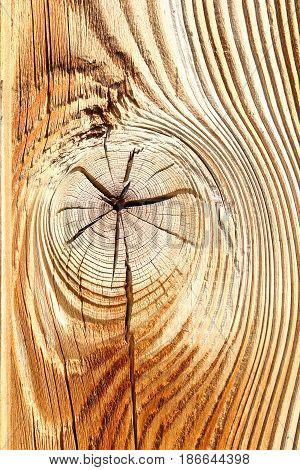 detail of wooden knot on spruce plank texture for your design