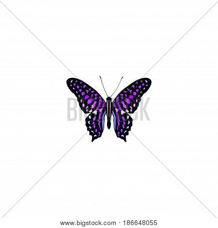 Realistic Striped Purple Crow Element. Vector Illustration Of Realistic Polyommatus Icarus Isolated On Clean Background. Can Be Used As Violet, Purple And Butterfly Symbols.