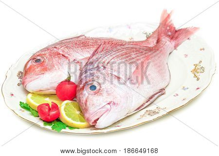 couple of Raw porgy on white background
