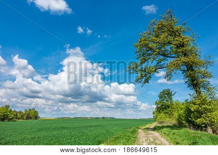 Spring Countryside With Green Field, Road And Blue Sky