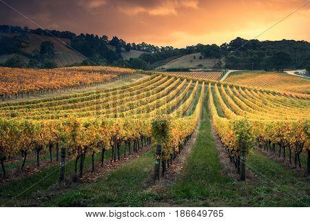 Golden sunset over South Australian vines