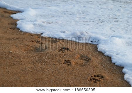 Travel To Island Phuket, Thailand. The Footprints Of Peoples And Dogs On The Sand Beach Near To Sea.