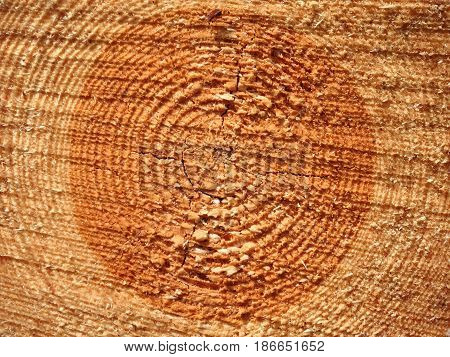wood texture of cutted tree trunk macro