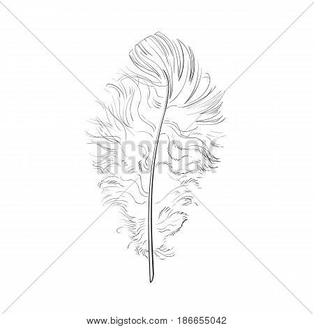 Hand drawn tender, fluffy black and white bird feather, sketch style vector illustration on white background. hand drawing of scarlet, tender feather