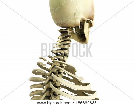 Medically Accurate 3D Illustration Of The Skeletal System The Cervical Spine