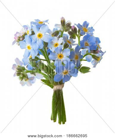 Small bouquet of  Forget-me-nots isolated on white background.