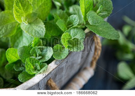 Fresh Mint Leaves Herb. Selective Focus, Copy Space