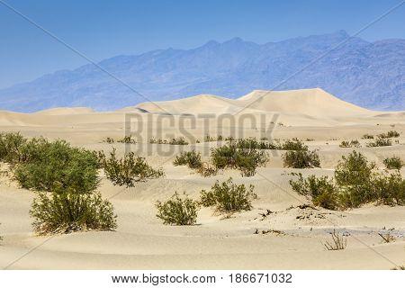 Dried Desert Gras In Mesquite Flats Sand Dunes