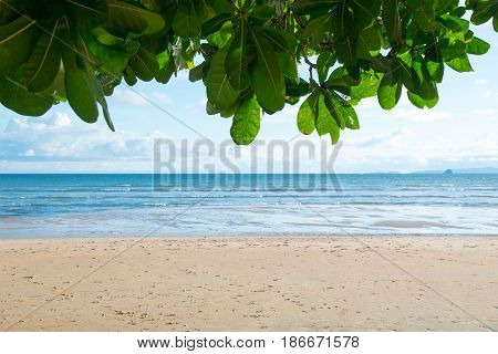 Front view Sea waves sand beach and Fish Poison Tree