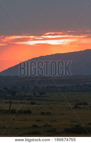 Sunset over the savanna of Masai Mara. Kenya, Africa