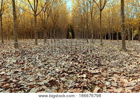 background of fallen dried leaves in forrest