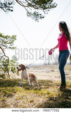 Young Pet Dog Breeds Beagle Walking In The Park Outdoors. The Girl Carefully Walks The Puppy On A Le