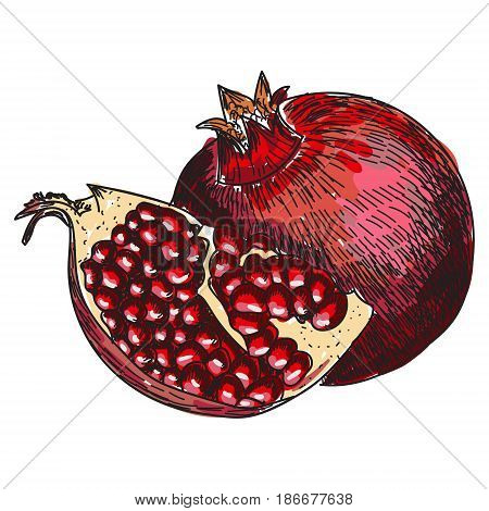 Pomegranate fruit, berry. Organic nutrition healthy food. Engraved hand drawn vintage retro vector Pomegranate engraving sketch etch illustration. Isolated on white background.