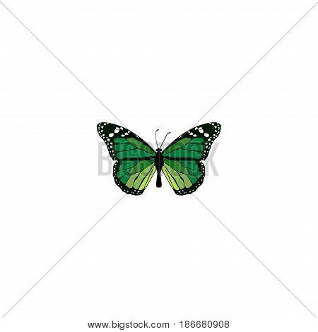 Realistic Green Peacock Element. Vector Illustration Of Realistic Birdwing Isolated On Clean Background. Can Be Used As Malachite, Butterfly And Green Symbols.