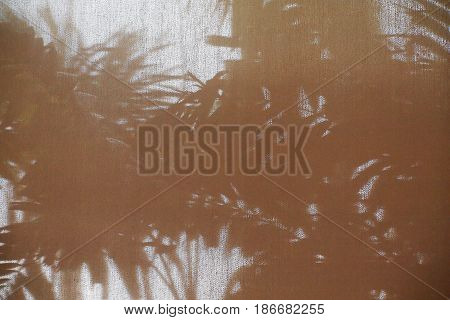 abstract background shadow shade of the palm leaf on curtain