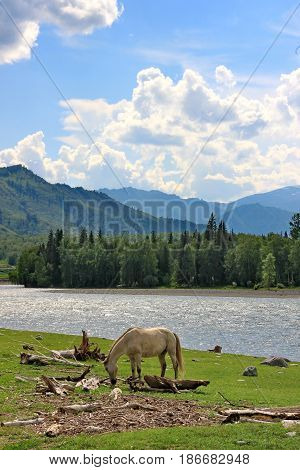 Horses is grazed on sunny meadow. Lunch break. Summer. Journey on horseback. Lake Baikal.