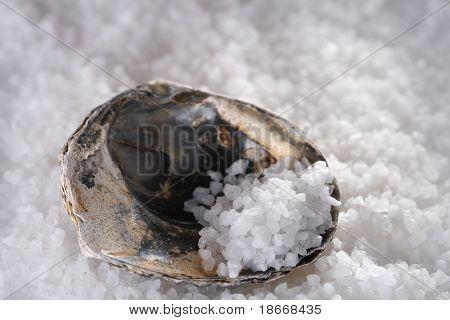 sea salt in sea shell on white salts background, shallow DOF