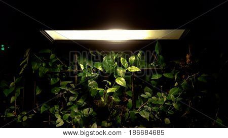 The electrical lamp for usable and outdoor decorate