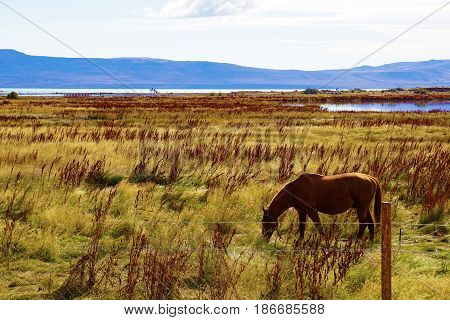 Landscape of a field in front of a lake and mountains with a shadowy horse in the foreground