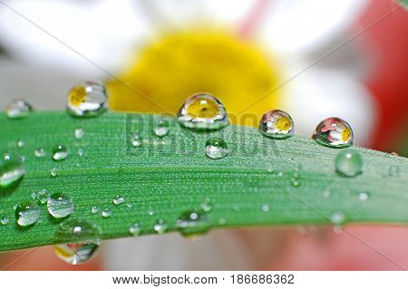 Flower refraction in a raindrop, Raindrops on grass after the rain