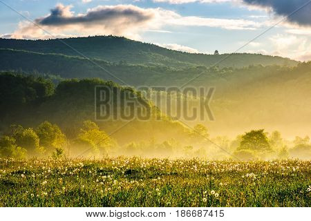 dandelion field in foggy valley. countryside landscape in mountains at sunrise. gorgeous springtime weather