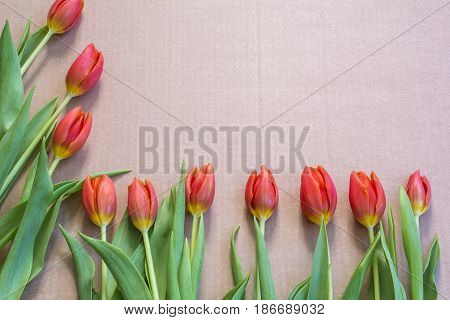 Line of red tulips around the cardboard
