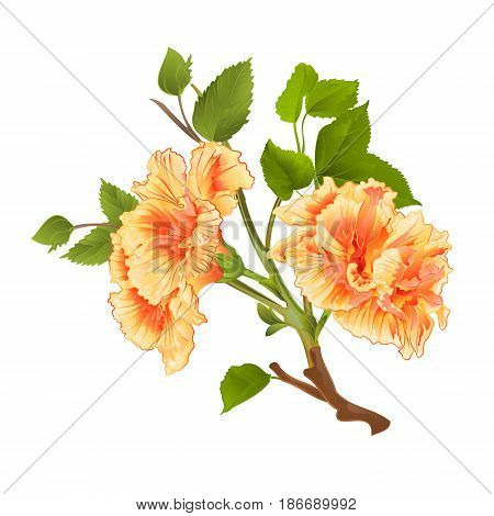 Branch yellow hibiscus tropical flowers on a white background vintage hand draw vector illustratio