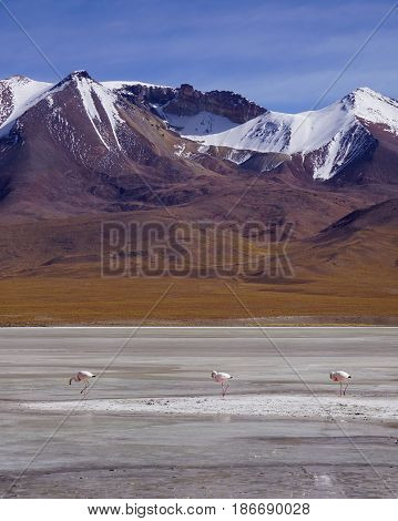 Mountain Landscape in Bolivia. Portrait Orientation. Lonely mountain in the middle of nowhere with watery field of nothing in the foreground, 3 flamingos searching for food and blue skies